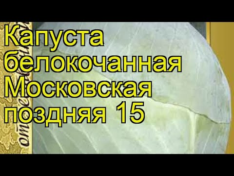 Капуста белокочанная Московская поздняя 15. Краткий обзор, описание Moskovskaya Pozdnyaya 15