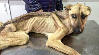 САМАЯ ХУДАЯ СОБАКА В МИРЕ 7 кг Спасение Собаки