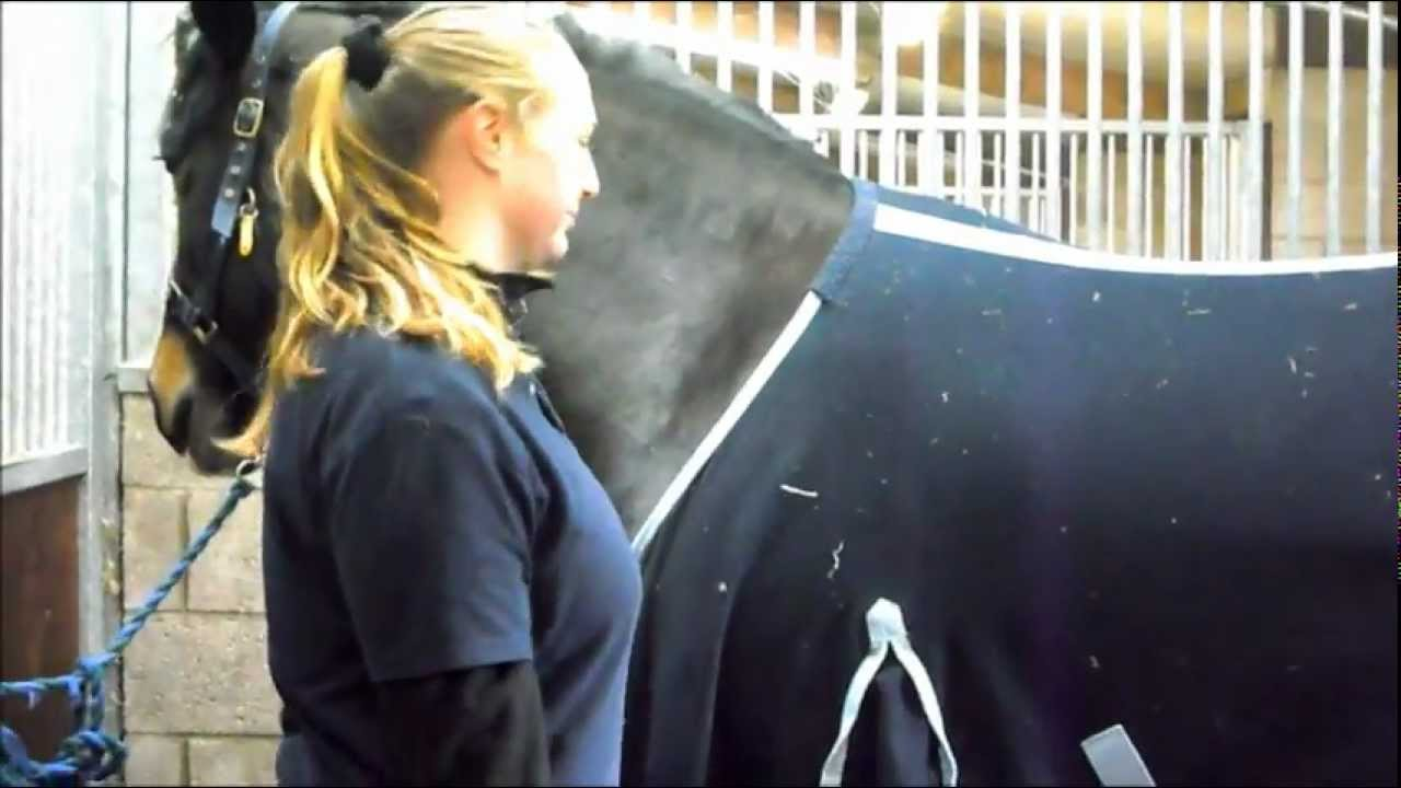 Stable Management Video- Grooming