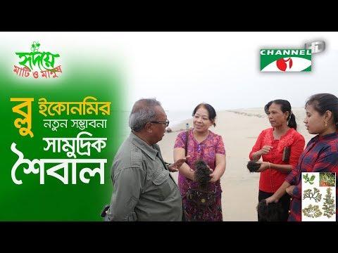 ব্লু ইকোনমির নতুন সম্ভাবনা | Seaweed | New prospect of Blue Economy | Bangladesh | Shykh Seraj |