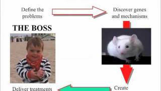 Prof William Mobley -The gaps in Down syndrome research Thumbnail