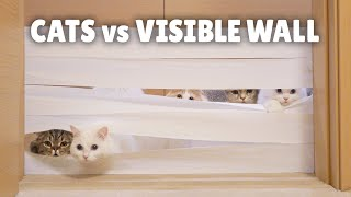 Cats vs Visible Wall
