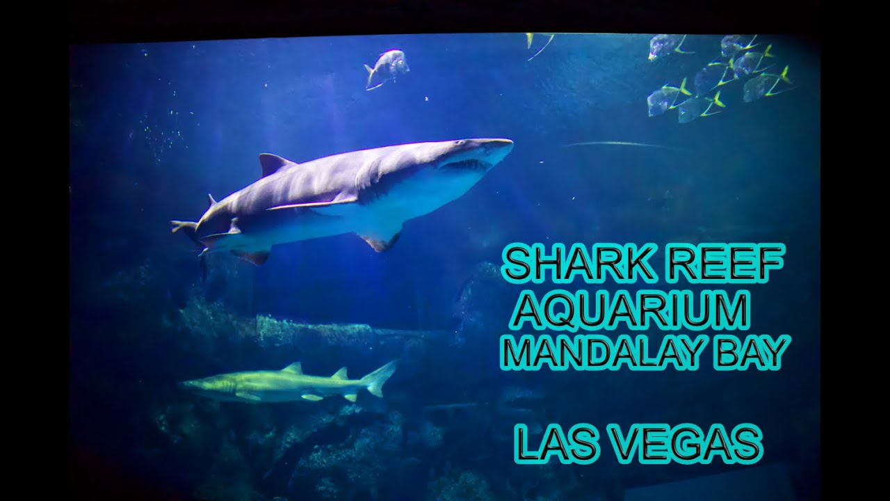 Shark Reef Aquarium at Mandalay Bay Las Vegas Tour ...