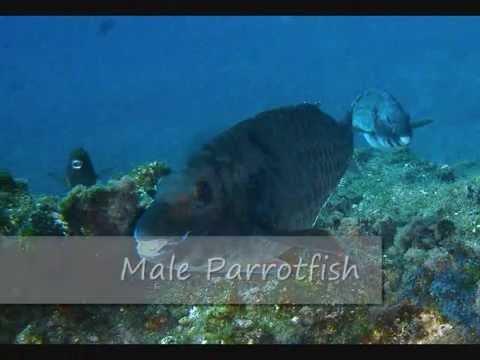 marine life slideshow