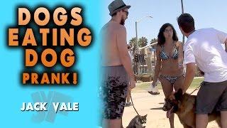 Dogs Eating Dog Prank!
