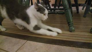 new a home for kitty chapter 4 how to introduce a new cat to dogs