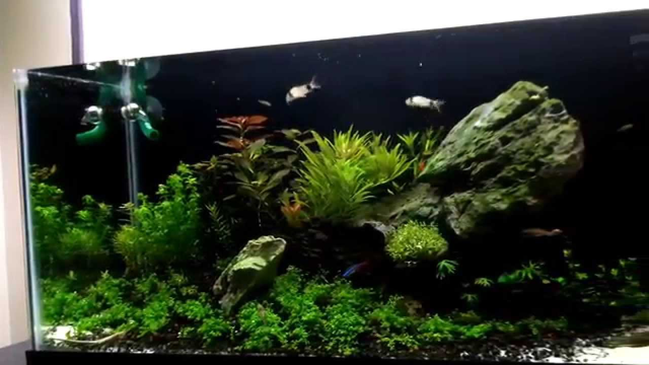 20l planted aquarium youtube. Black Bedroom Furniture Sets. Home Design Ideas