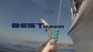 Лучшие приколы недели BEST HUMOR #2 l Веселая акула
