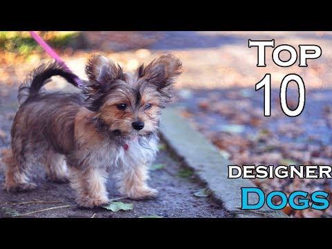 TOP 10 DESIGNER DOGS