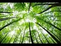 Spoken Meditation for Sleep: Into the Tree House - A Guided Visualization for Calm