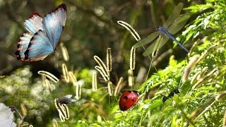 Детям про насекомых. Бабочка, стрекоза, божья коровка, муравей, муха, комар.