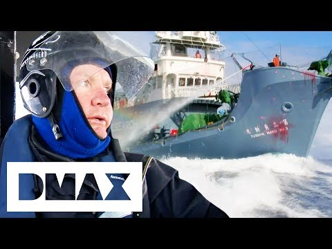 The Sea Shepherds Launch An Attack On Japanese Whalers | Whale Wars