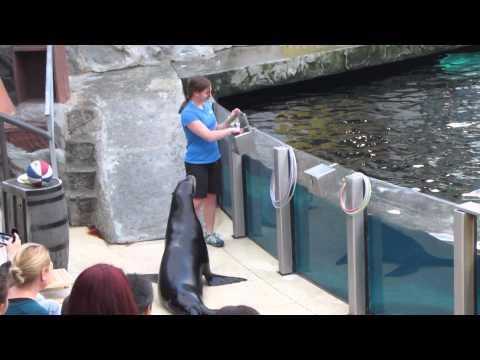 The Sea Lion Show at West Edmonton Mall Part 1