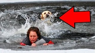 Top 10 Times ANIMALS Saved HUMANS