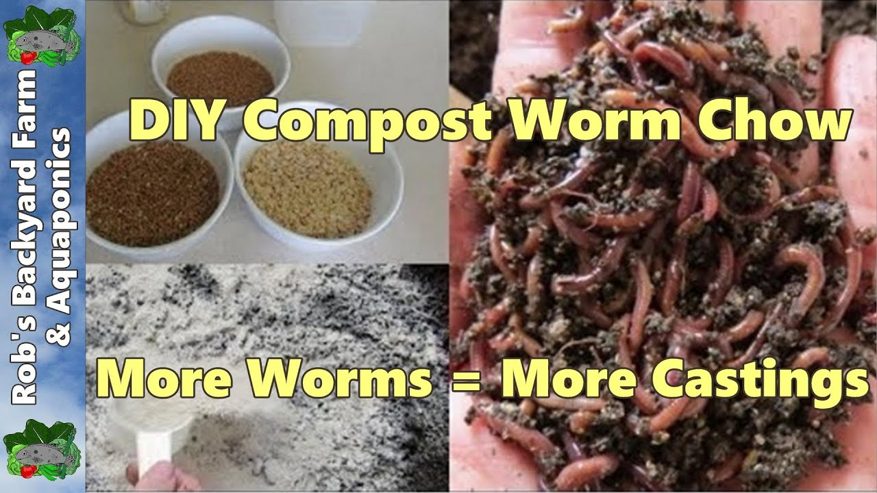 Boost compost worm growth using diy dry food more worms mean more its youtube uninterrupted buycottarizona Images