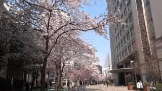 Токио. Сакура бульвара Косю-кайдо \ Sakura Koshu Kaido. Tokyo(В эпоху Эдо (1603-1868), когда власти сегунов Токугава в Японии уже ничто не угрожало, прежде всего по экономичес..., 2015-04-01T00:27:01.000Z)