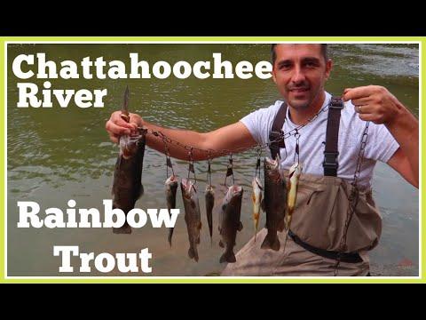 ★TROUT Chattahoochee River Atlanta| Rainbow Trout★2019