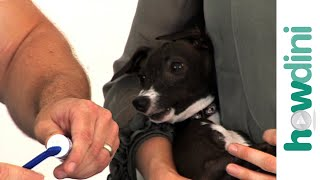How To Brush Your Dog's Teeth - Dog Teeth Cleaning Tips