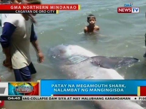 BP: Patay na megamouth shark, nalambat ng mangingisda sa Cagayan de Oro City