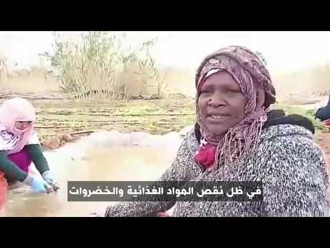 أنا الشاهد: الإنتاج الزراعي الذاتي بمخيمات اللاجئين الصحراويين  - 11:54-2019 / 3 / 23