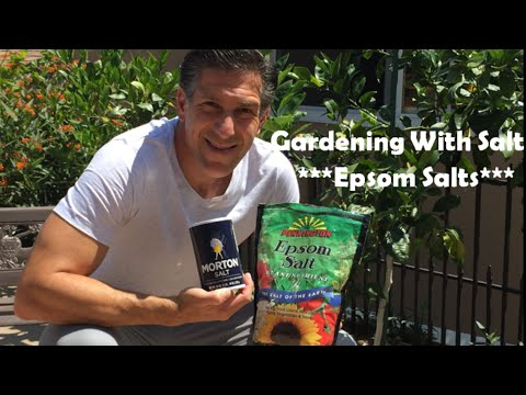 Gardening With EPSOM SALT For A Greener & Healthier Plant--DO NOT USE TABLE SALT!