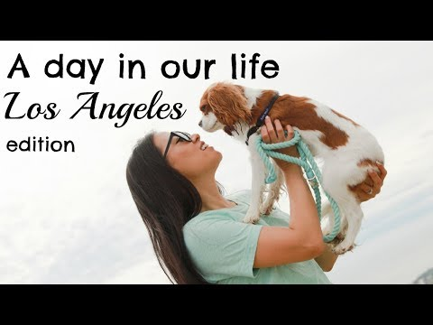 A DAY IN OUR LIFE | Dogs in Los Angeles