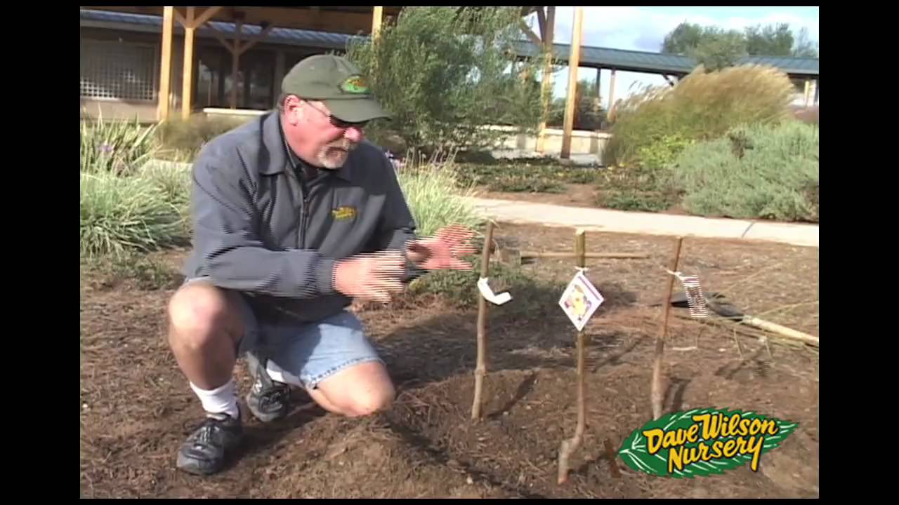 - Plant 3 Fruit Trees In 1 Hole - YouTube