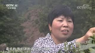 《远方的家》 20200506 大好河山 新安江——皖南山水出新安  CCTV中文国际