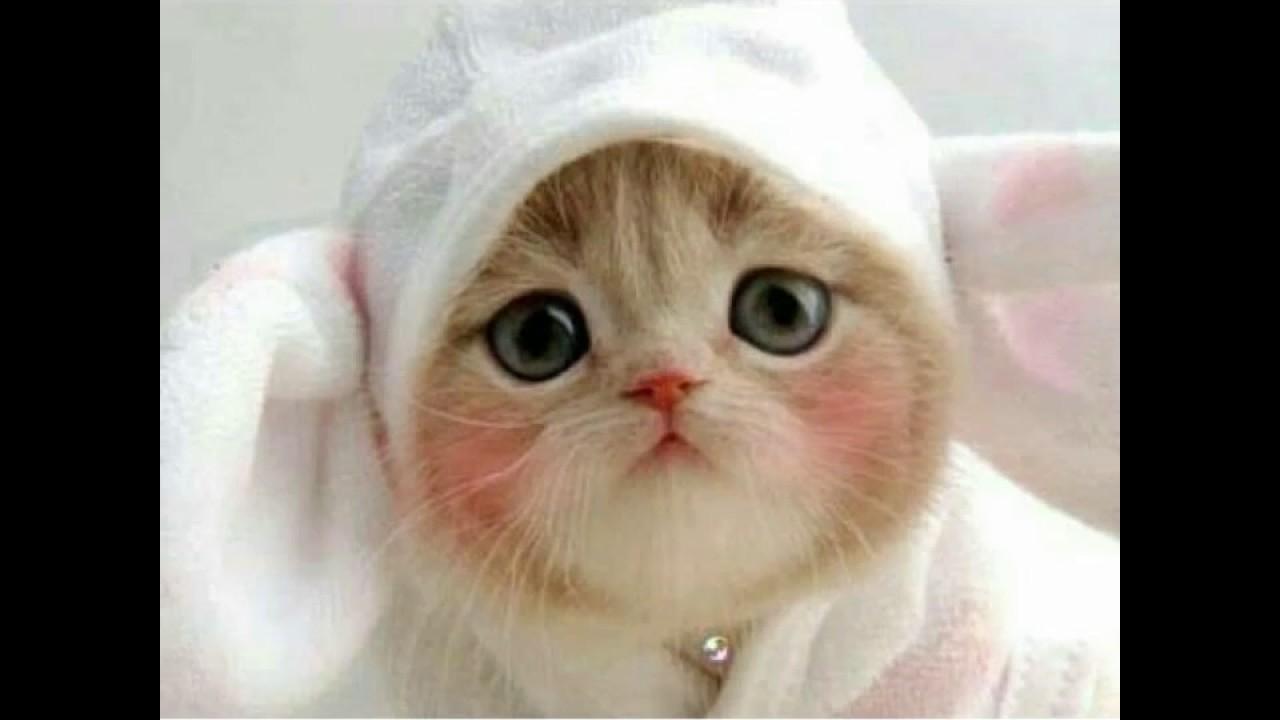 En şirin Yavru Kedi Fotoğrafları Youtube