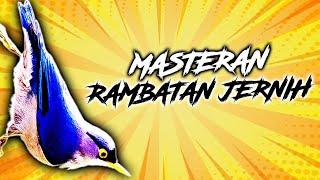 Gambar cover RAMBATAN GACOR SUARA ASLI PANJANG PALING JERNIH AMPUH   MP3 SUARA BURUNG   MASTERAN KACER   1 JAM