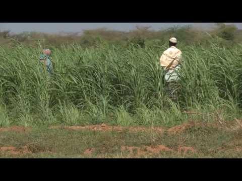 Community Fodder Production in Mandera - Kenya