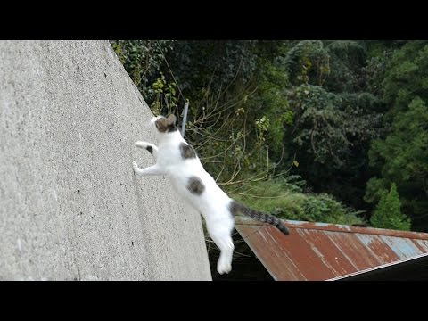 Cat Jumping in Slow Motion - Ninja Cat