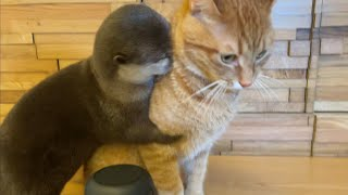 otter and cat at stay at home was interesting!