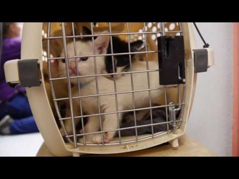 Tucson Humane Society takes in 60 kittens from Yuma