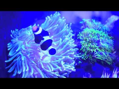Biorb Reef Tank