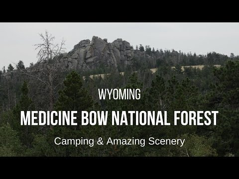 Medicine Bow National Forest in Wyoming - Camping with Amazi