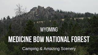 Medicine Bow National Forest in Wyoming - Camping with Amazing Scenery, Wildlife, and Cows