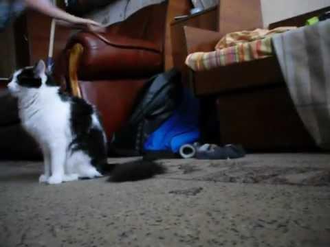 Сафари на кошку/Safari on the cat