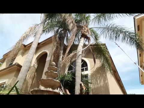 how to kill a palm tree without cutting it down