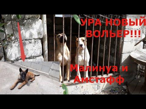 Строим тёплый вольер для собак, Амстафф и Малинуа в шоке от хозяина. У нас сегодня праздник ура.