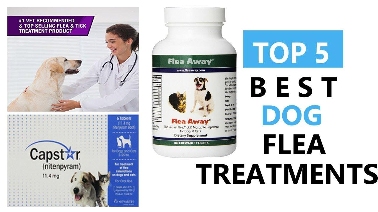 Best Dog Flea Treatments Top 5 Best Dog Flea Treatments Review