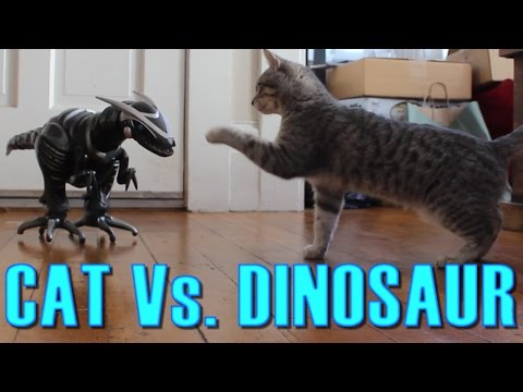 Cat Vs. Dinosaur