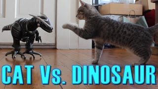 Cat Vs. Dinosaur - Cat Spooked, Then Befriends a Robot Dinosaur - Maya The Cat thumbnail