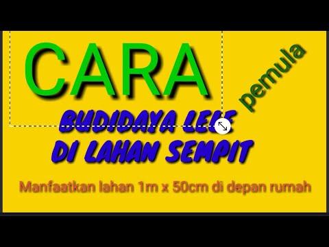 CARA BUDIDAYA LELE DI LAHAN SEMPIT DAN BAGI PEMULA - YouTube