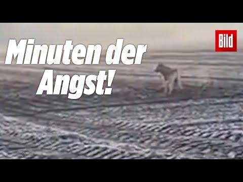 """Frau versucht in Panik, Wolf """"wegzuschreien"""" (unheimliche Begegnung)"""
