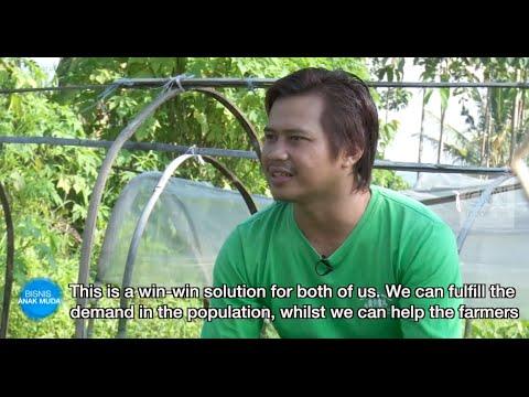 YUM Organic Farm & Burgreens on CNN Indonesia