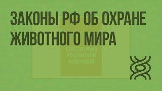 Законы РФ об охране животного мира. Охрана и рациональное использование животного мира. Видеоурок