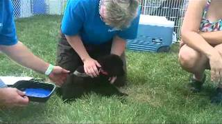 Video Puppy Gets Paws Painted for Paw Prints download MP3, 3GP, MP4, WEBM, AVI, FLV Agustus 2018