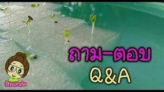 ถาม-ตอบ กับป้าแมวการปลูกผักไฮโดรโปรนิกส์ ผักไร้ดิน Q&A  hydroponics