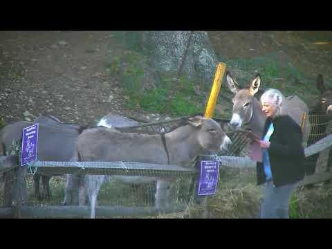 Donkey treat n photos cp Lee b4 320pm 10122017